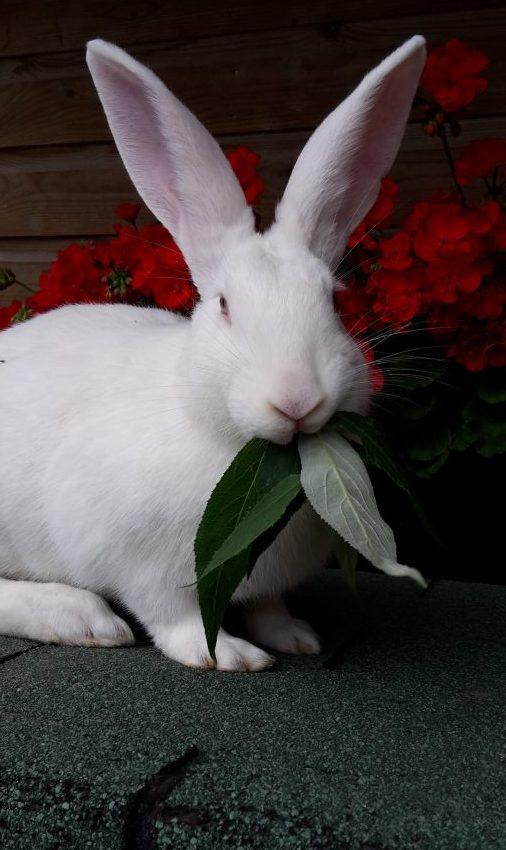 groep Lauwersmeer konijnen